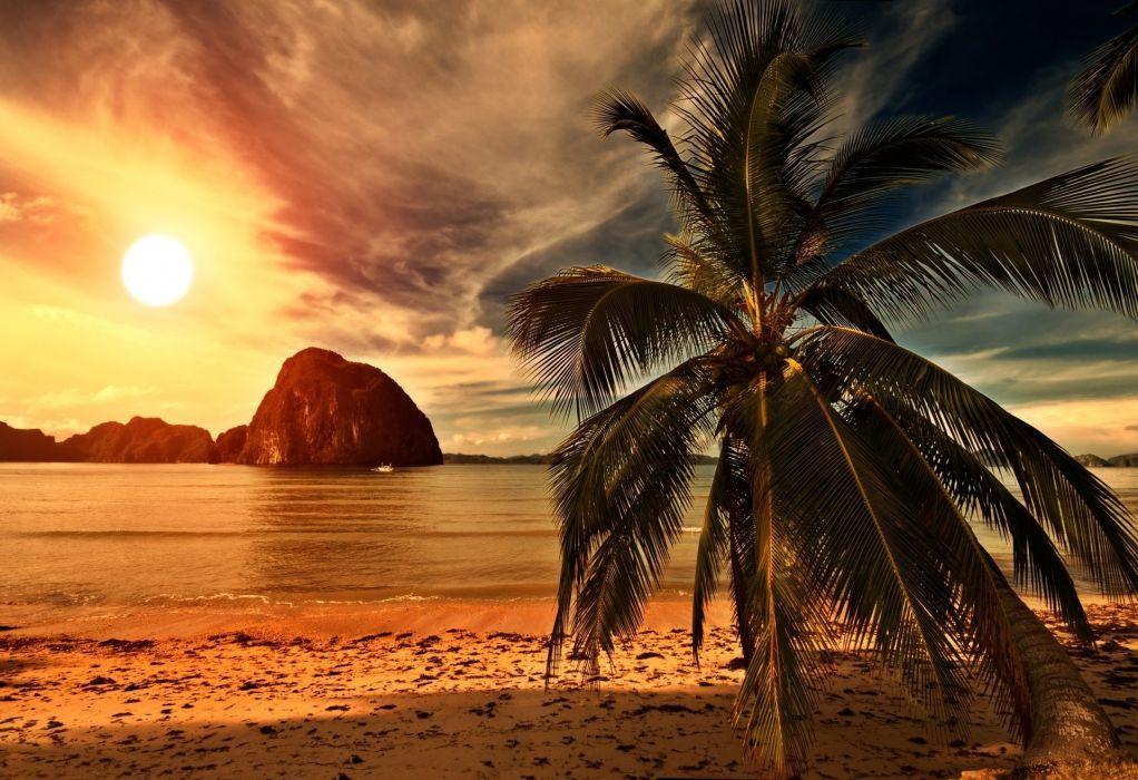 tropical-beach-palm-tree-sunset-ocean-sea-sunlight-clouds-sky-beach-shore-nature-landscape-weeping-palm-sand-the-tropical-beach-palm-sunset-ocean-sea-sun-clouds-sky-beach-beach-nature-landscape-weepin wallpaper