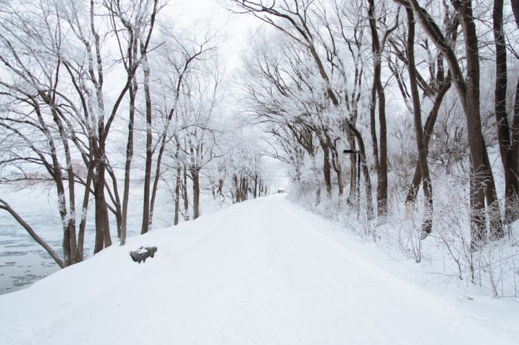 cold forest path snow trees white winter wallpaper