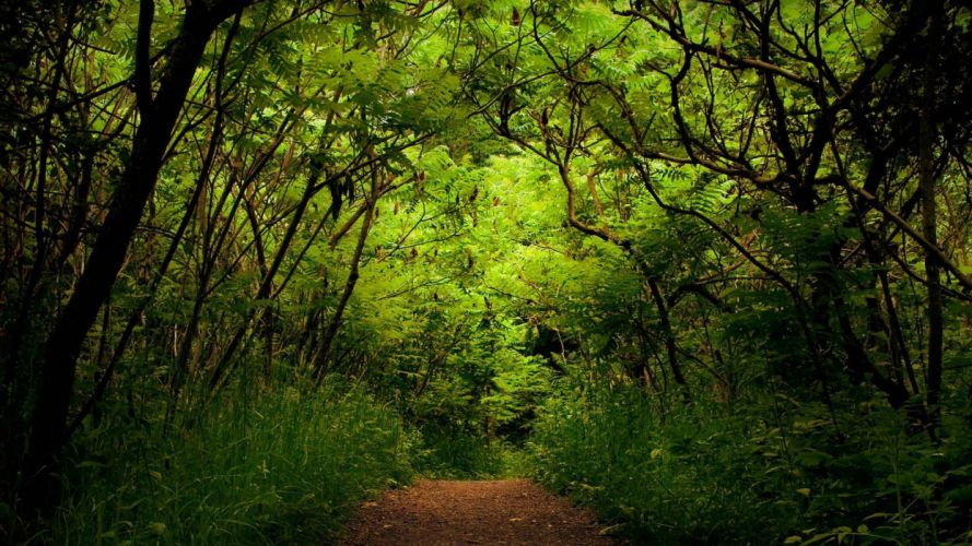 forest nature road wallpaper