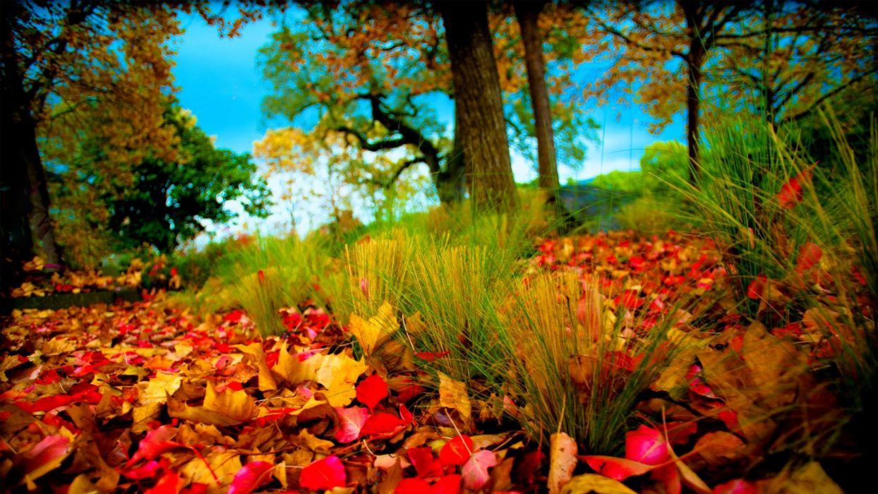 leaves tree autumn nature wallpaper