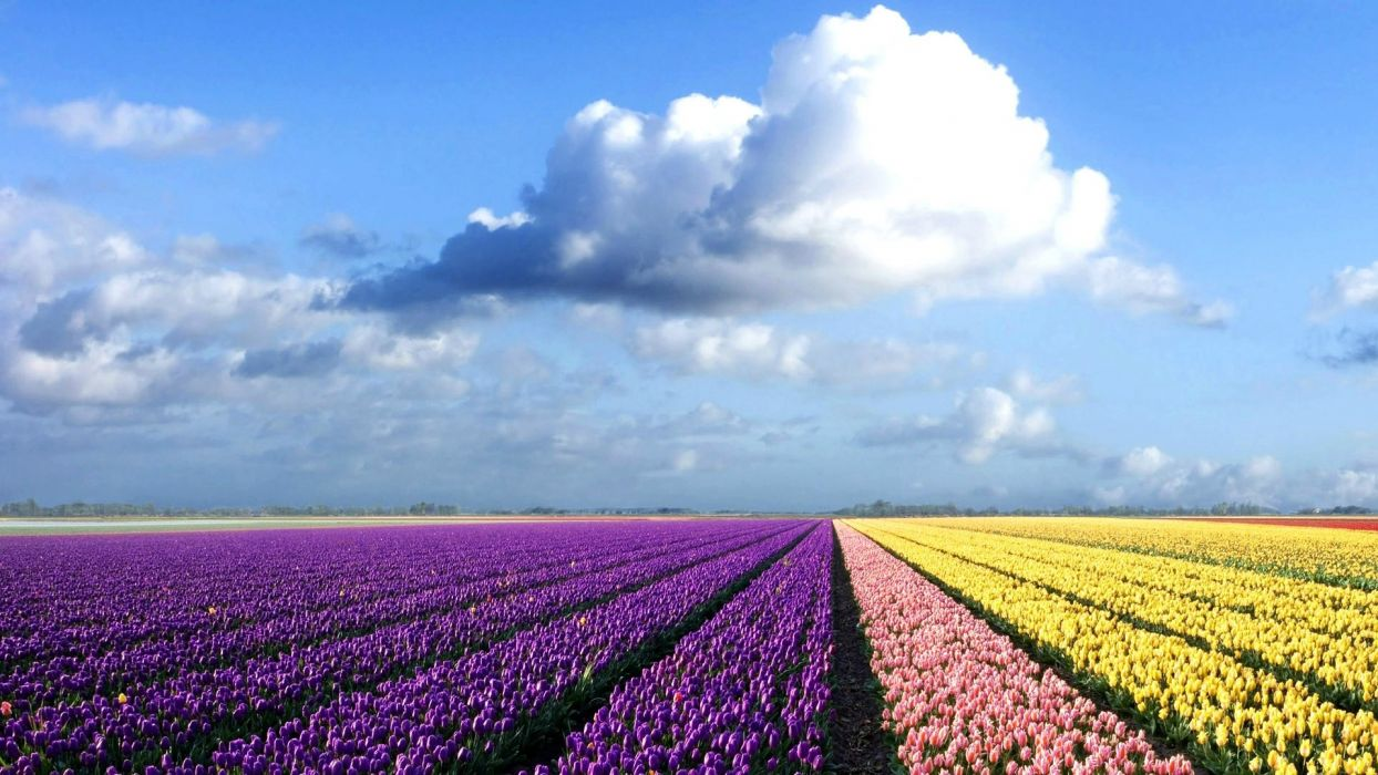 field-of-flowers- wallpaper