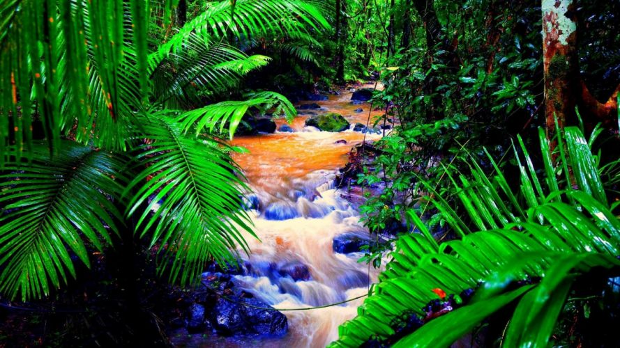 waterfal rainforest trees green wallpaper