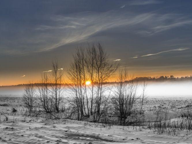 winter field fog wallpaper