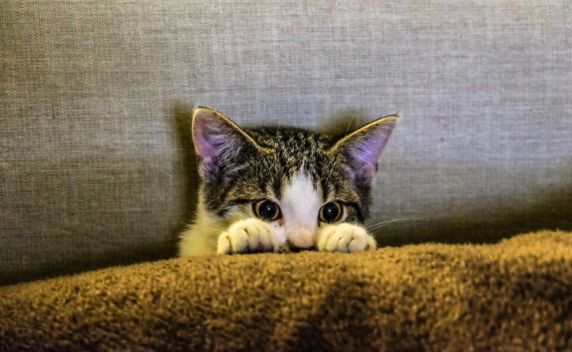 animal animal photography cat feline kitten paws pet tabby wallpaper