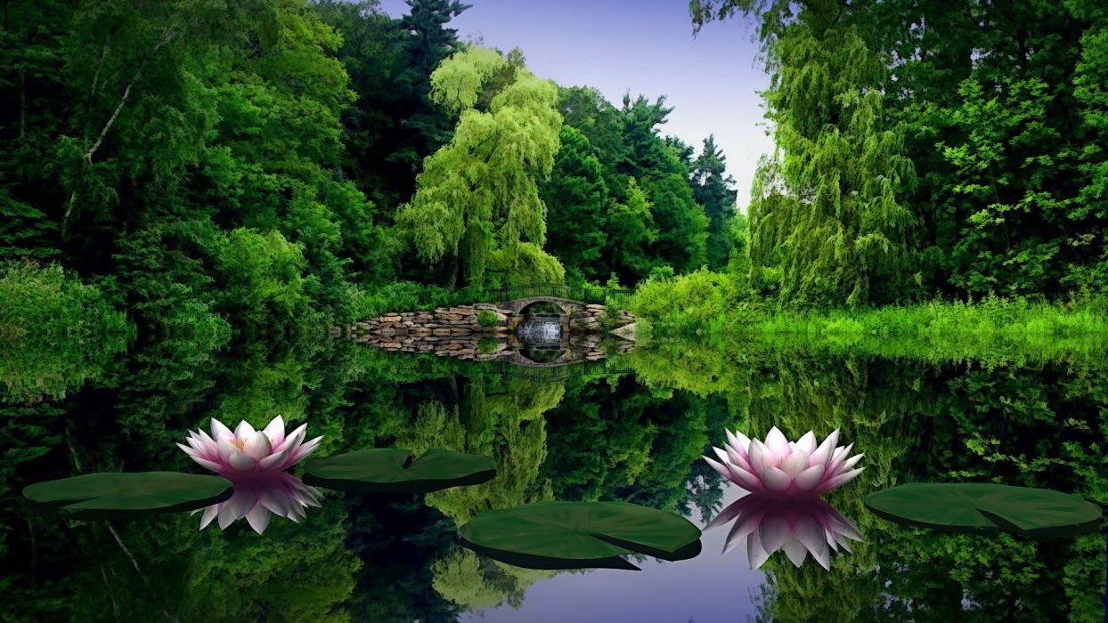 Amazing Nature Lily Lake Amazing Lake in Green Forest Nature wallpaper