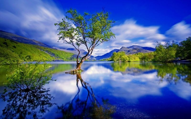 Beauty forest lake landscape Mountain nature river tree Green Tree in the Moumtain Lake wallpaper