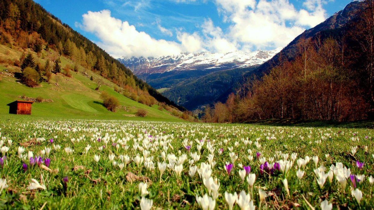 -mountain-hut-hills-grass-nature-crocus-cottage-flowers-lovely-spring-sky-meadow-landscape-beautiful-pretty wallpaper