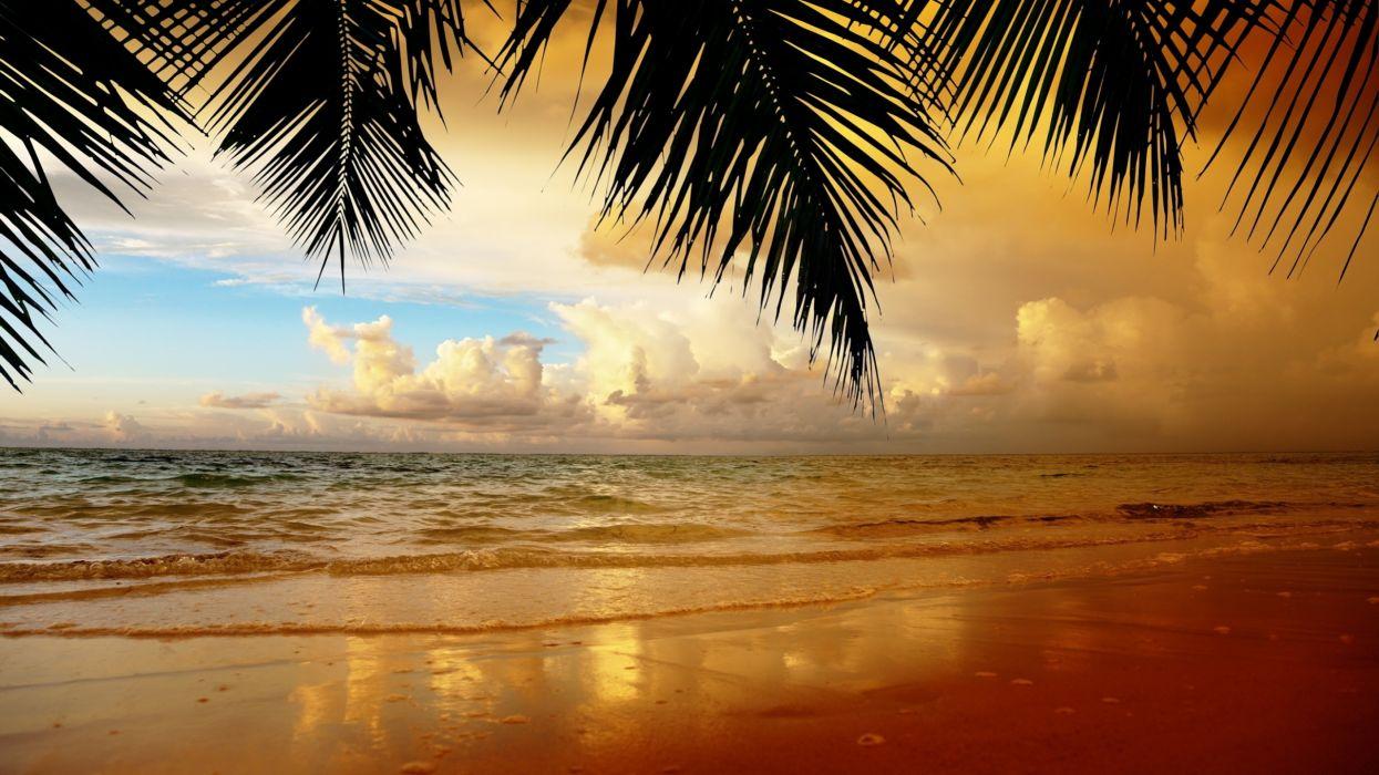 playa solitaria mar arena palmera wallpaper