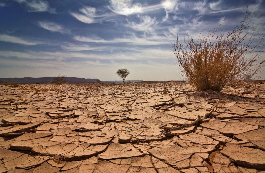 desierto naturaleza tierra agrietada planta seca wallpaper