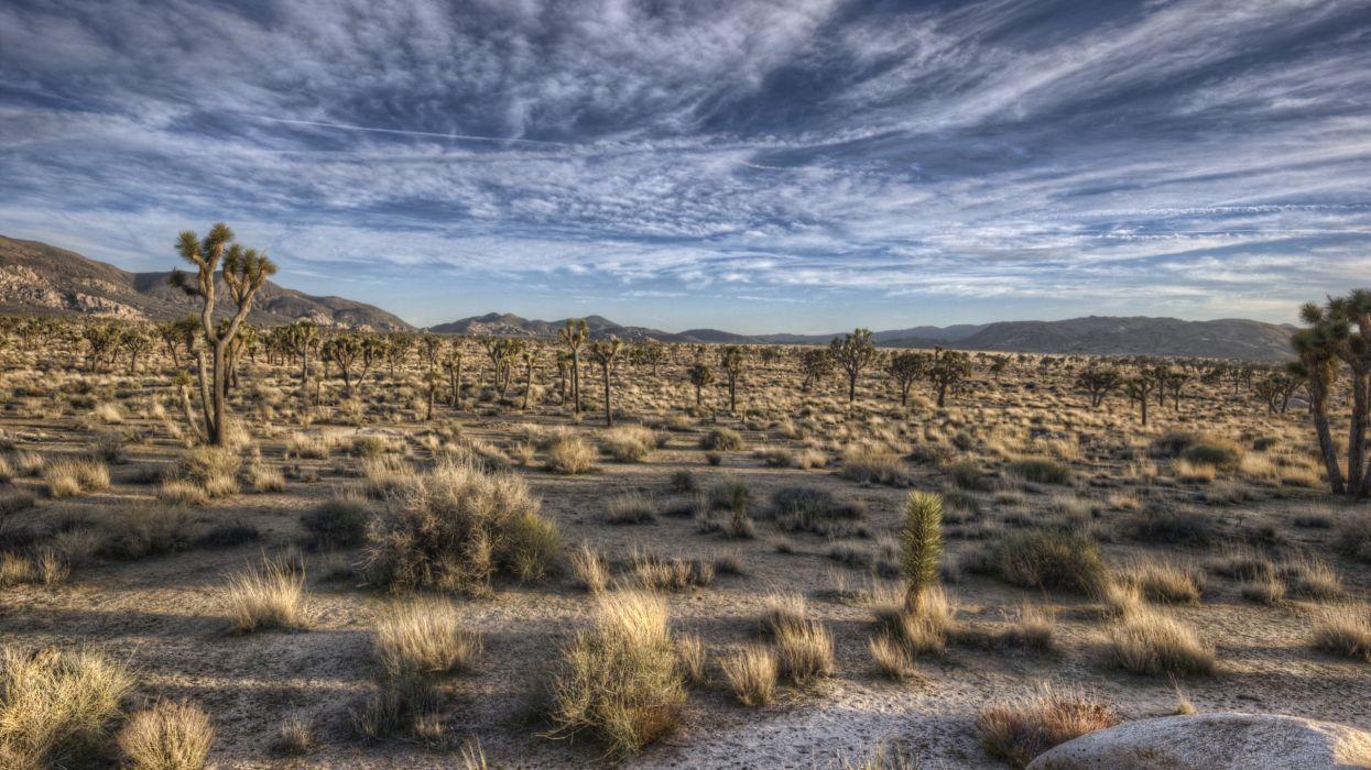 desierto vegetacion naturaleza wallpaper