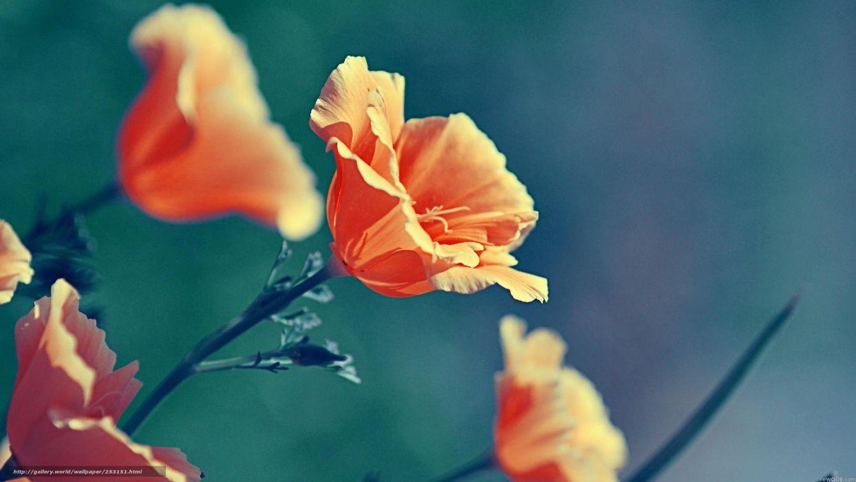 flores naranjas naturaleza wallpaper