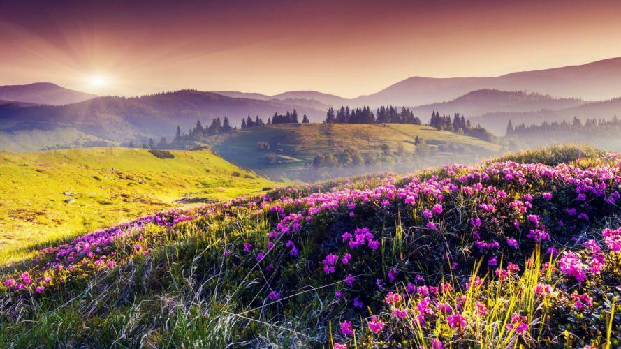 flores colores naturaleza montay wallpaper