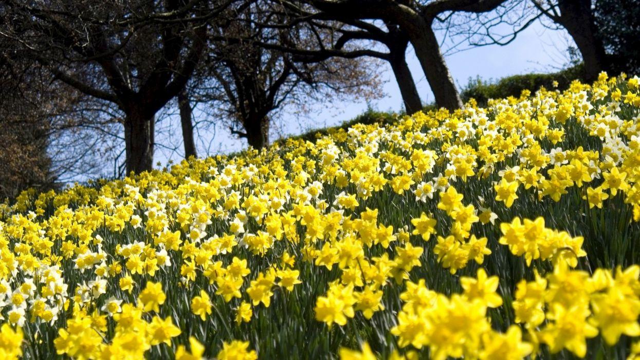 prado flores amarillas blancas naturaleza wallpaper