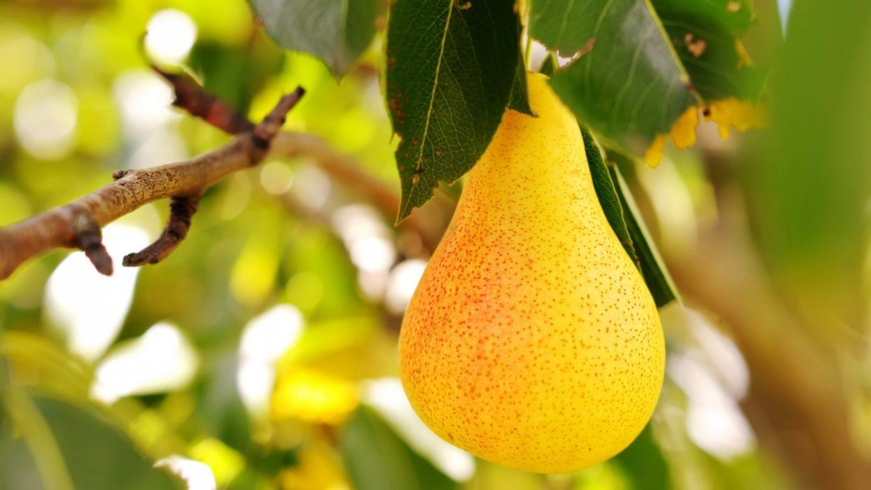 fruta pera arbol naturaleza wallpaper