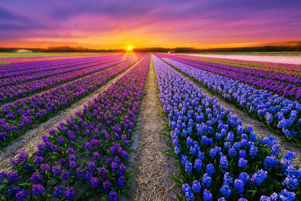 amazing flower field wallpaper