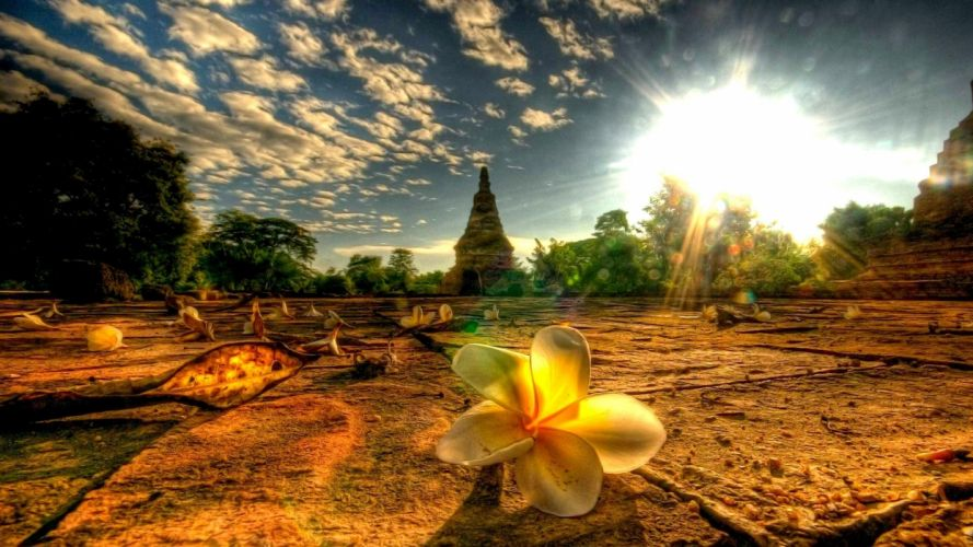 beautiful-flower-at-the-temple wallpaper
