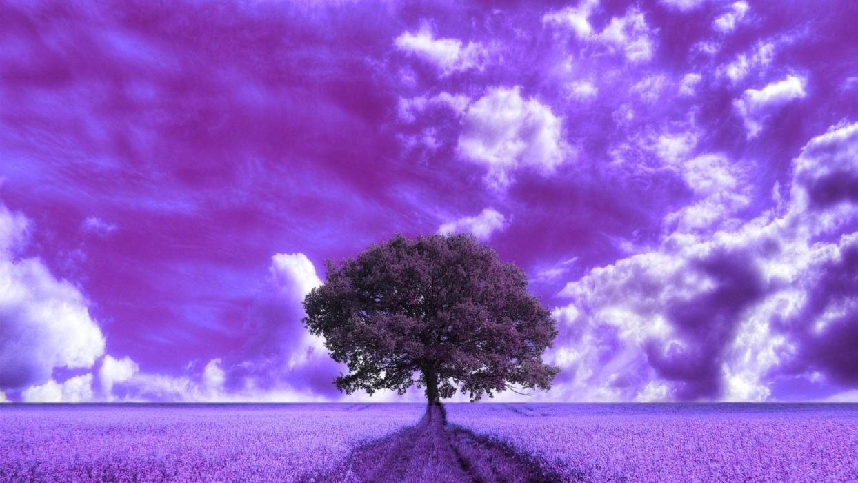beautiful-purple-field wallpaper