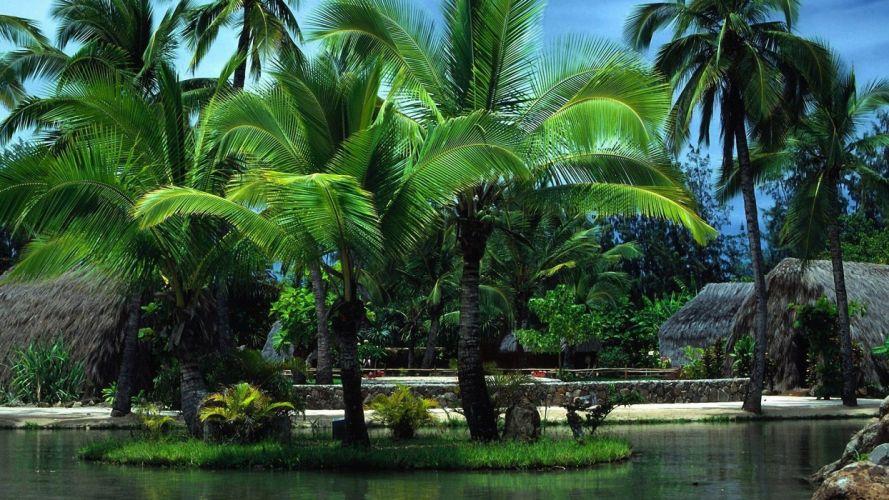 paisaje naturaleza palmeras oasis wallpaper
