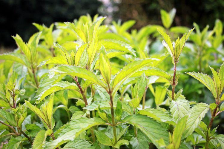 plantas naturaleza hojas tallos wallpaper
