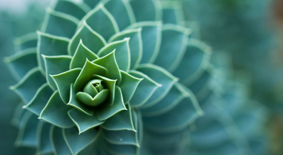 planta naturaleza espiral wallpaper