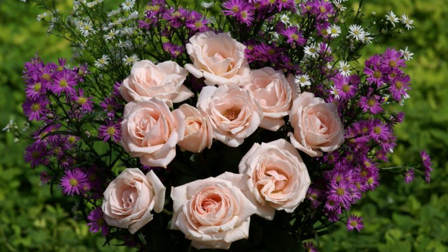 flower-pink-roses-daisies-lavendar-pastel-petals-purple-blooms-daisy-rose wallpaper