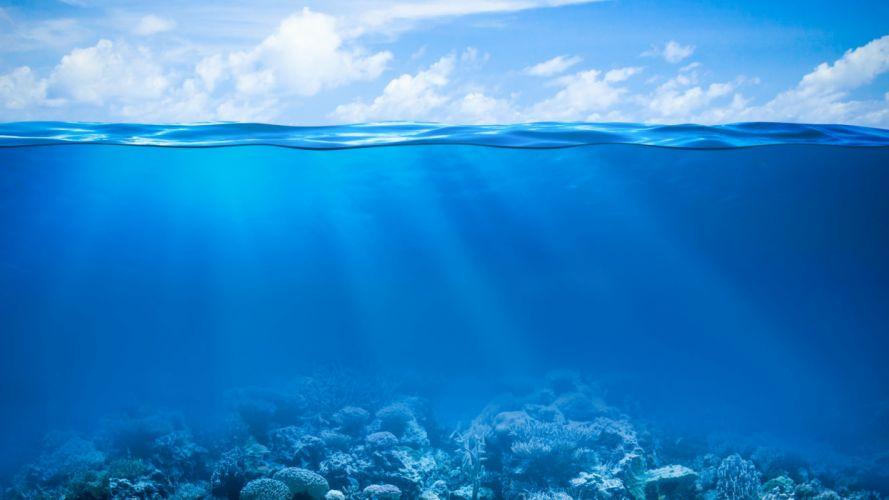 tropical coral mares naturaleza azul wallpaper