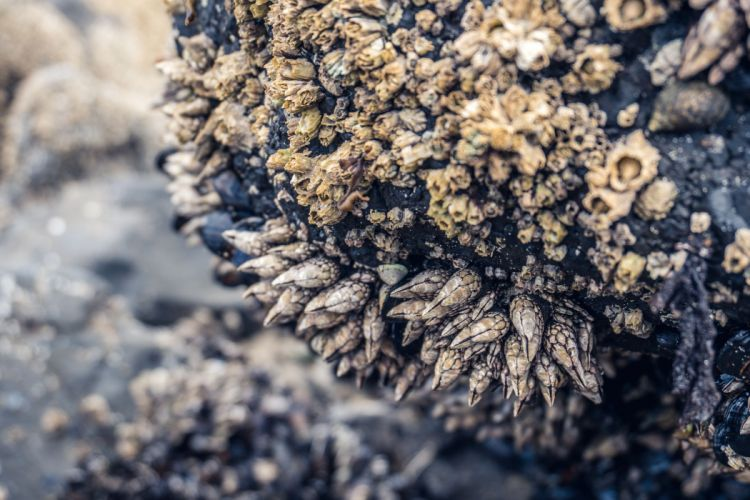 abstract batch blur close-up dirty dry environment Mossy rocks outdoors pattern rock rough seashells shells stone surface texture wallpaper