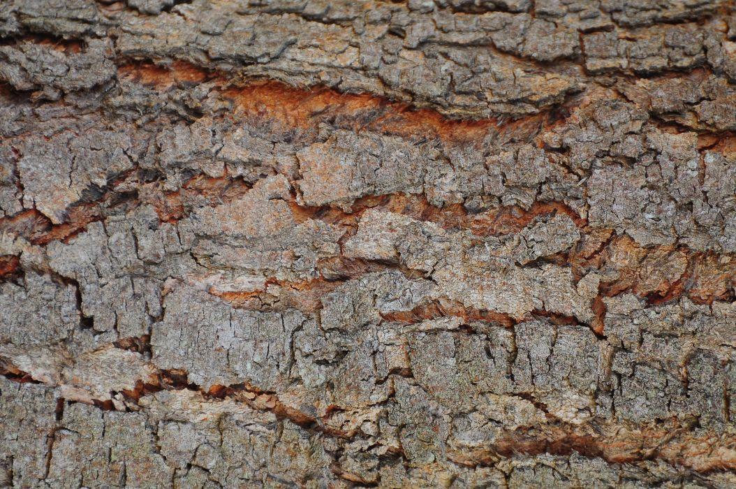 bark close-up crack decay dirty dry log macro rough surface texture trunk wood wallpaper