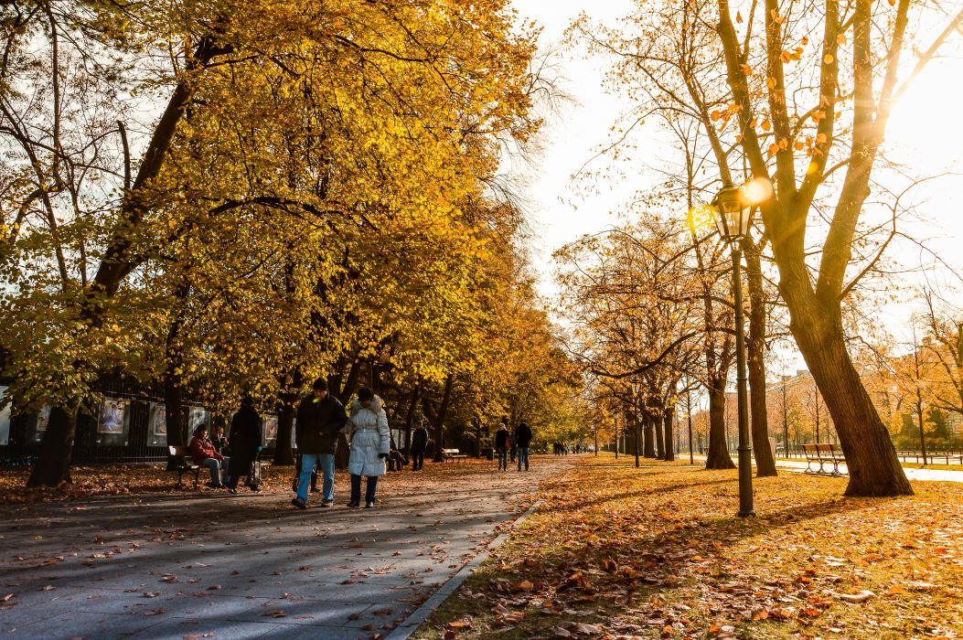 autumn colours benches branches cold couple dry leaves environment fall footpath guidance leaves nature outdoors park path pathway pavement people road street lamps street posts sun glare sunlight trees walking Caio wallpaper