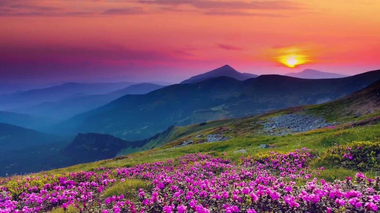 bloom blooming blossom calm countryside dawn delicate dusk environment field flora flowers foggy grass growth hazy idyllic majestic misty mountains murky nature peaceful quiet scenic sky sun sunrise sunset tranquil wallpaper