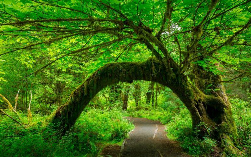 bosque arboles carretera naturaleza wallpaper