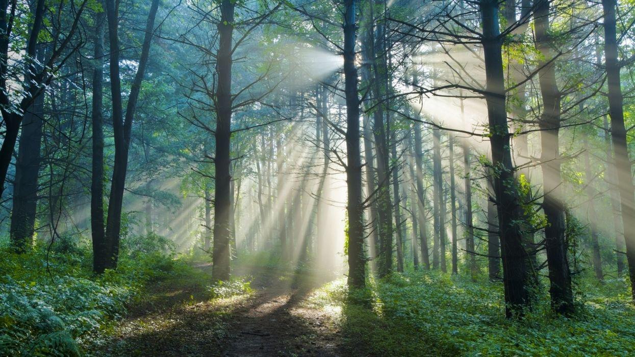 bosque arboles rayos sol naturaleza wallpaper