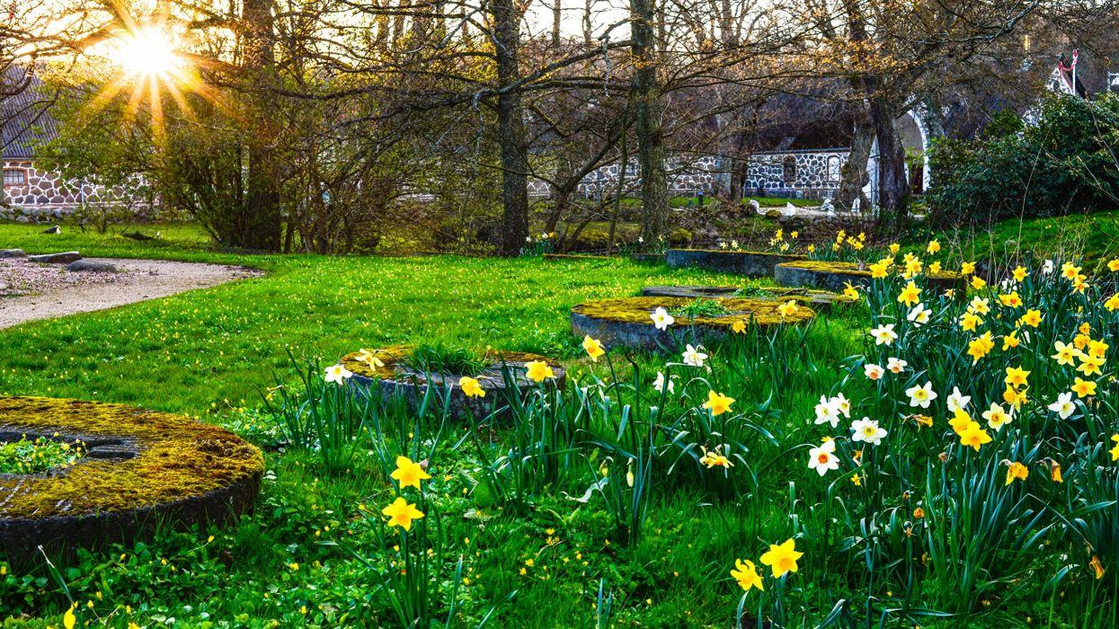 flores molino primavera naturaleza wallpaper