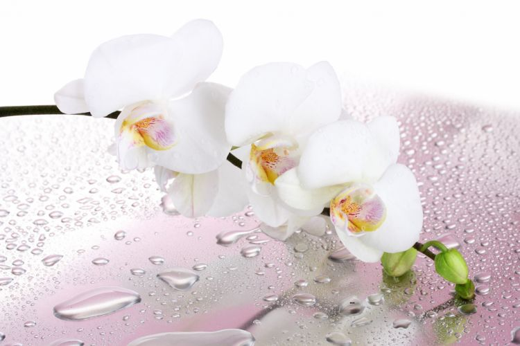 Orchid Closeup White Drops Flowers wallpaper