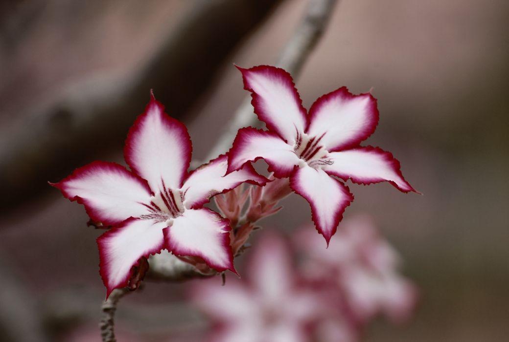 bloom blossom flora flowers macro petal plant wallpaper