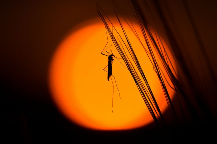grasshopper insect silhouette wallpaper