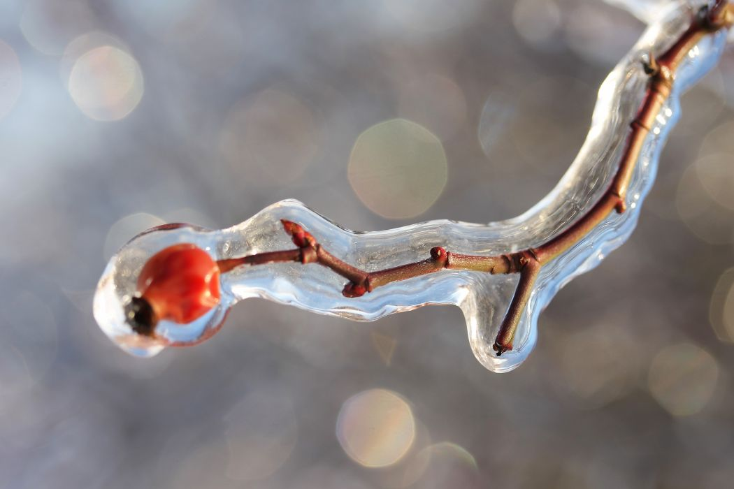 blur bokeh close-up cold crystal drop frost frozen ice landscape macro nature outdoors snow water winter wallpaper