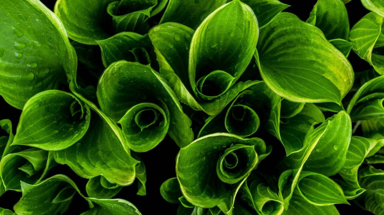 close-up green leaves macro plant raindrops waterdrops wet royalty wallpaper