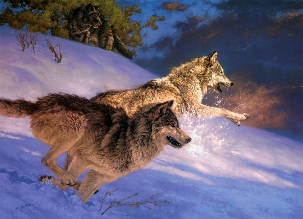 Wolves Animals wallpaper
