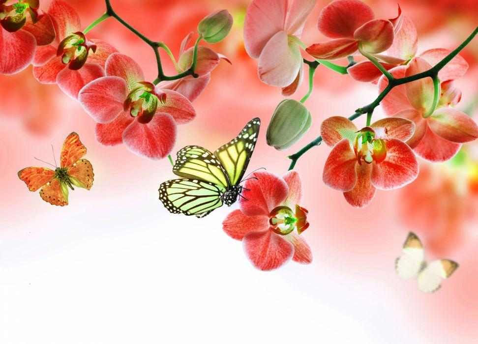 Orchid Butterflies Monarch wallpaper