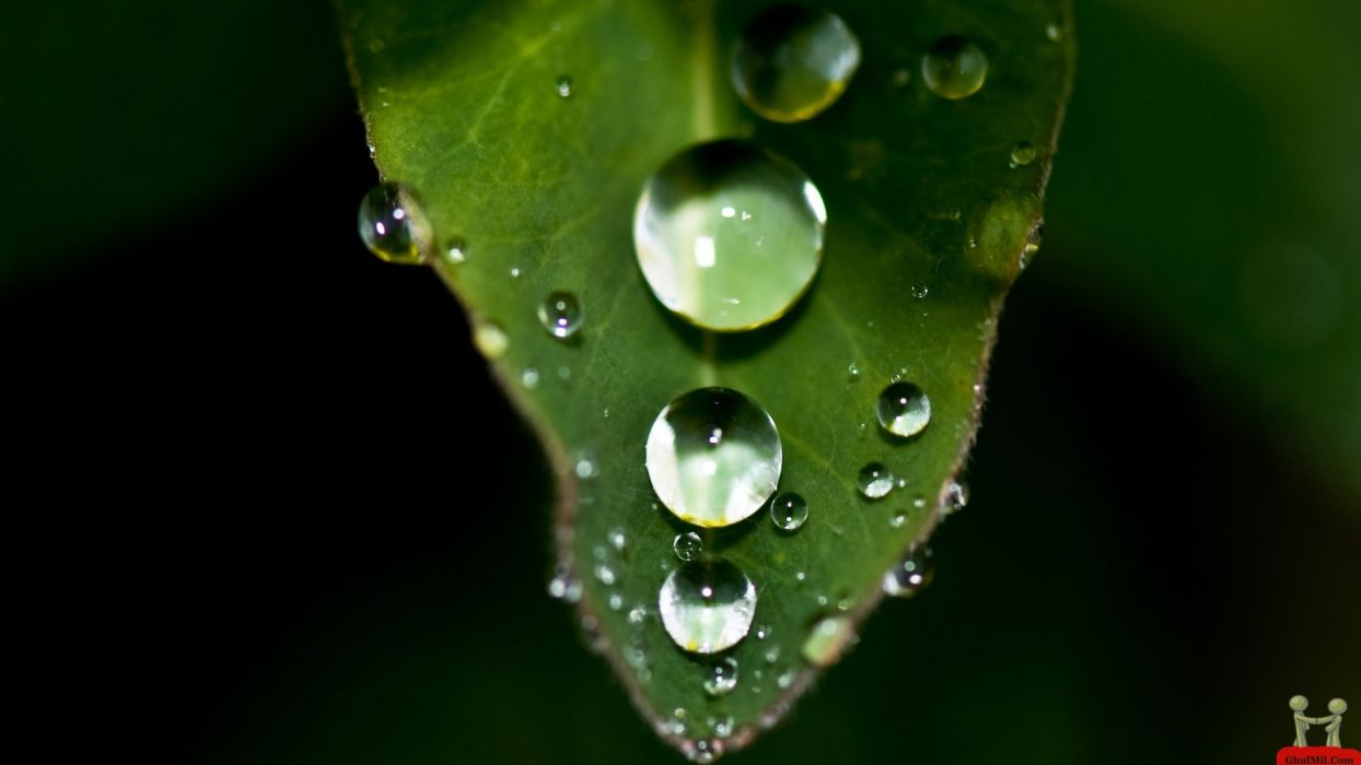 gotas lluvia hoja naturaleza wallpaper