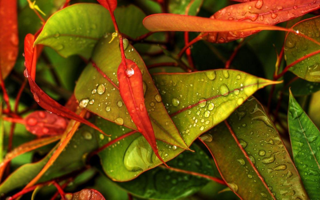 hojas colores naturaleza otoy wallpaper