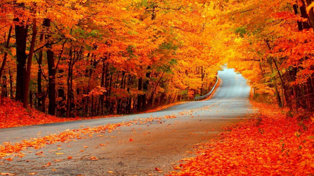 carretera otoy wallpaper