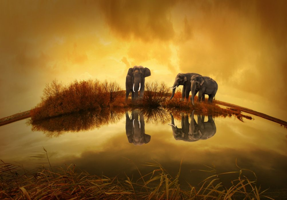 animals bushes clouds elephants grass lake nature reflections water wallpaper