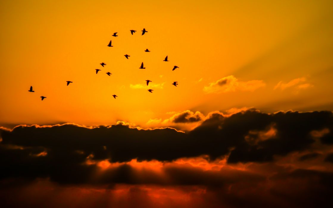 birds clouds cloudscape flock nature overcast silhouettes sky sun wallpaper