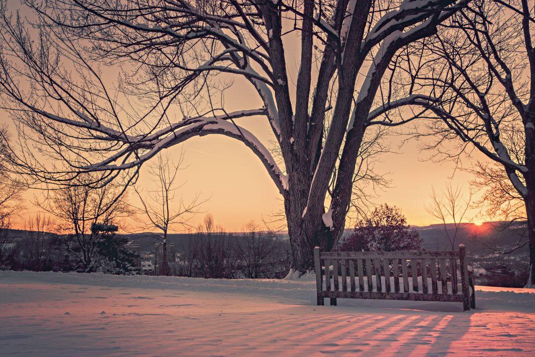 branches dawn dusk snow sunrise sunset tree twilight winter wallpaper
