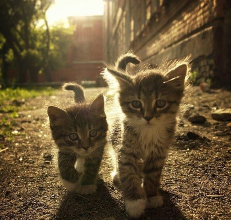 2 cachorros gato animales baby wallpaper