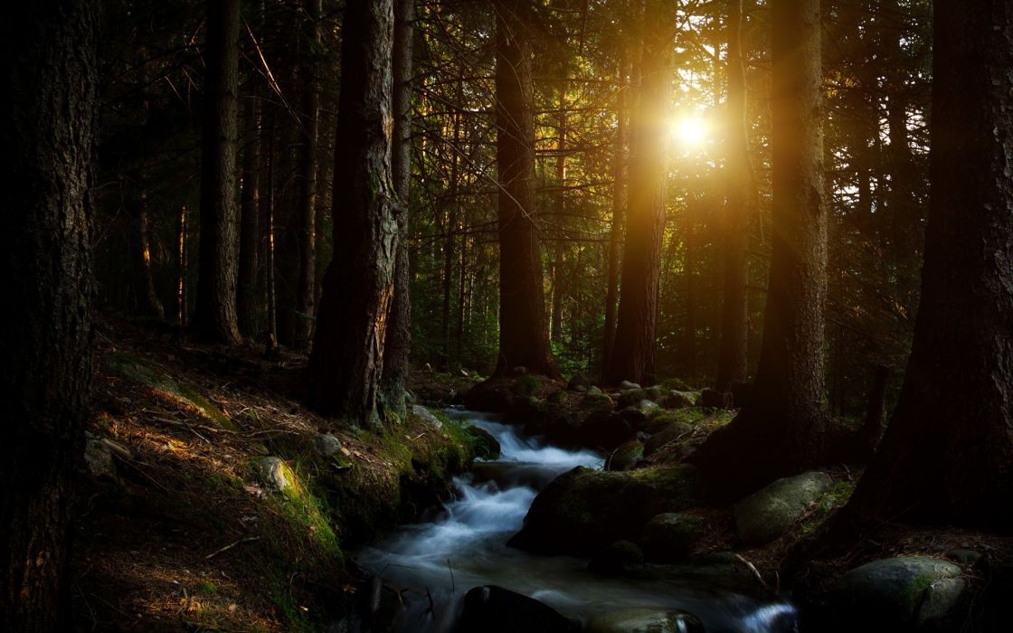 Dark forest creek beauty tree river wallpaper