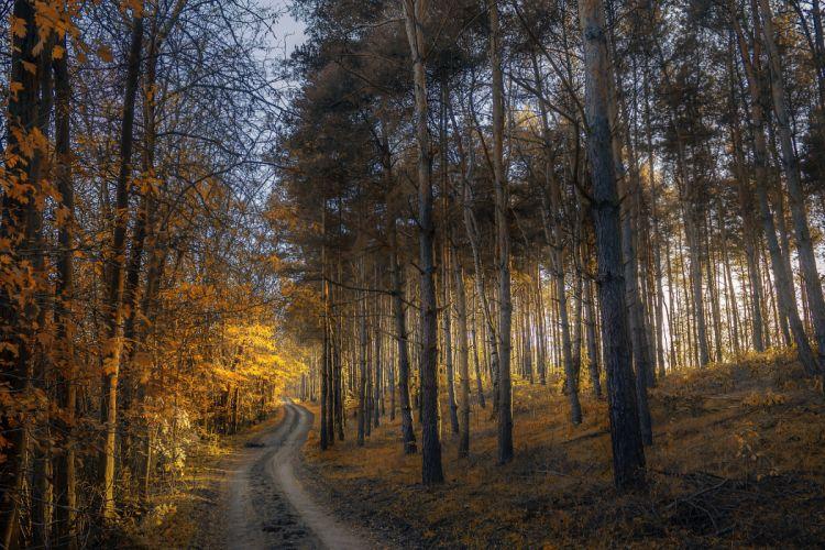 autumn forest trail grass trees wallpaper