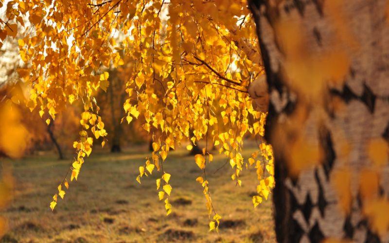 fall autumn foilage landscape nature tree leaf leaves wallpaper